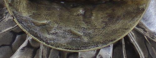 Konplott Global Glam Ring in apricot silber 5450543811994